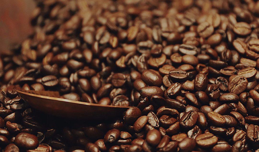 The Arabica Coffee Bean: A Brief Guide