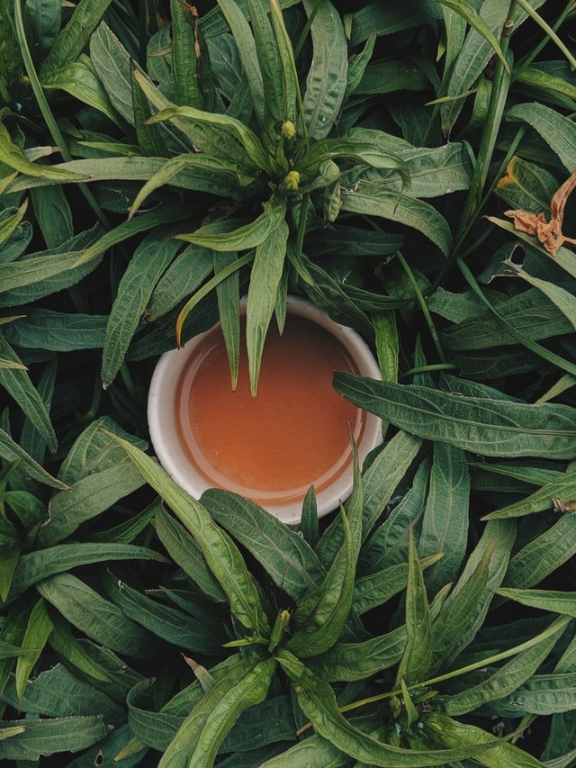 A healthy cup of tea surrounded by leaves